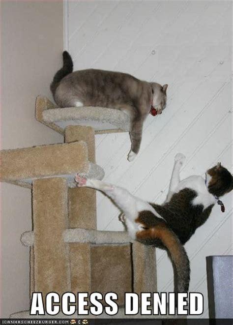 access denied lolcats lol cat memes funny cats