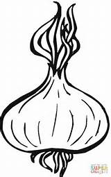 Onion Coloring Onions Drawing Pages Printable Supercoloring Clipart Apple Template Vegetables Crafts Garlic Vegetable Plant Getdrawings Paper Three Categories sketch template