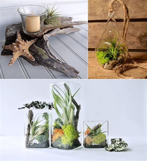 large wood planter 11 cool ideas to create air plant garden design swan