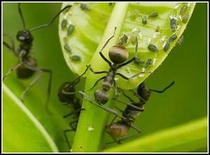 Hausmittel Gegen Ameisen Im Garten : hausmittel gegen ameisen im garten garten house und ~ Whattoseeinmadrid.com Haus und Dekorationen