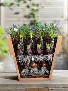 Tulpen Im Topf In Der Wohnung : blumenzwiebeln im garten 10 tipps mein sch ner garten ~ Buech-reservation.com Haus und Dekorationen