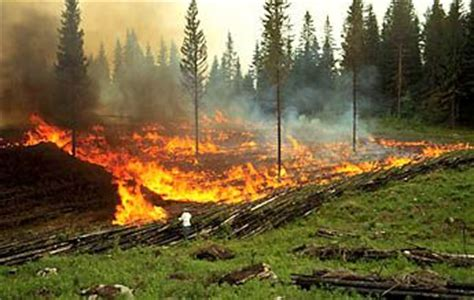 slash  burn  agriculture  pinterest