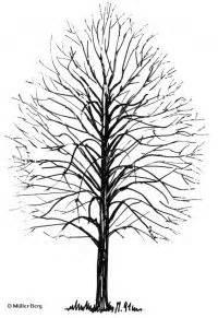 winter linde details baumbestimmung laubhoelzer