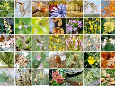i fiori di bach a cosa servono cosa sono i fiori di bach e come agiscono nel nostro corpo