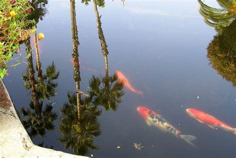 poisson pour bassin d exterieur construire un bassin mode d emploi