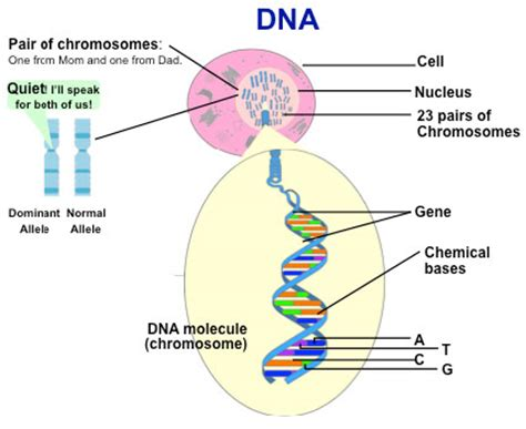 Genetic Diagram Gene Dna by Dna Structure Quotes Quotesgram