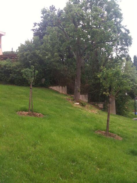 si鑒e social bouygues immobilier mipygreen les espaces verts comestibles de la résidence les fontanelles mipygreen