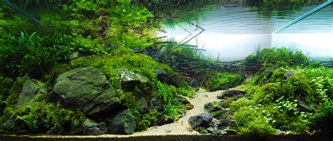 Aquascape Cliff Hui Ii  Fish Faqs