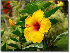Hawaiian Tropical Flowers Names