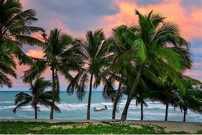 Tropical Caribbean Cuba Palm Sunrise Trees Island