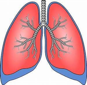Signs That Show The Lungs Are In The Danger Zone