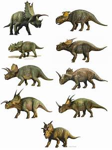 3499 best dinosaurs & creatures extinct or endangerd ...