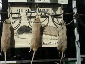 Was Fressen Ratten : ratten bek men bei befall im brennholz lager ~ One.caynefoto.club Haus und Dekorationen