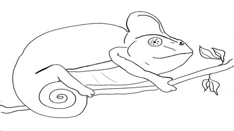 Mixed Up Chameleon Coloring Page by Mixed Up Chameleon Coloring Pages Page Lizard Sketch