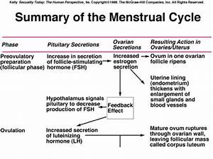 Hormone Cycle Chart Endocrine System Tumblr