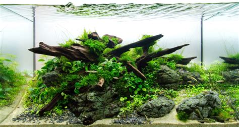 Fish Tank Aquascape by Aquascaping Greater Des Moines Botanical Garden