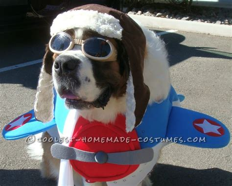 157 Best Images About Pet Halloween Costumes On Pinterest