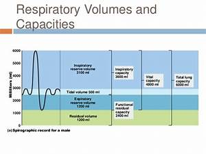 Chapter 22  Respiratory System   2