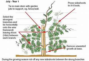Best 25  Wisteria Tree Ideas That You Will Like On