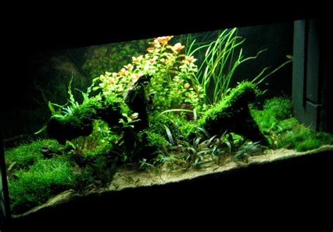 best 5 aquarium plants for low light tank aquascaper