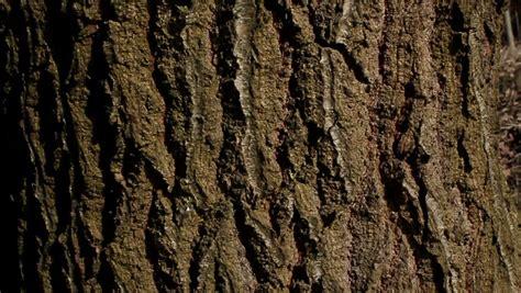 tree bark texture stock footage video  shutterstock