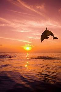 The gallery for --> Dolphins Jumping Out Of The Water At ...