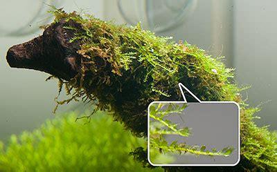 planted nature aquarium aqua diem page 2