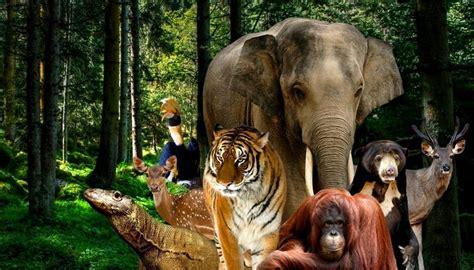 panduan wisata kebun binatang ragunan jakarta review