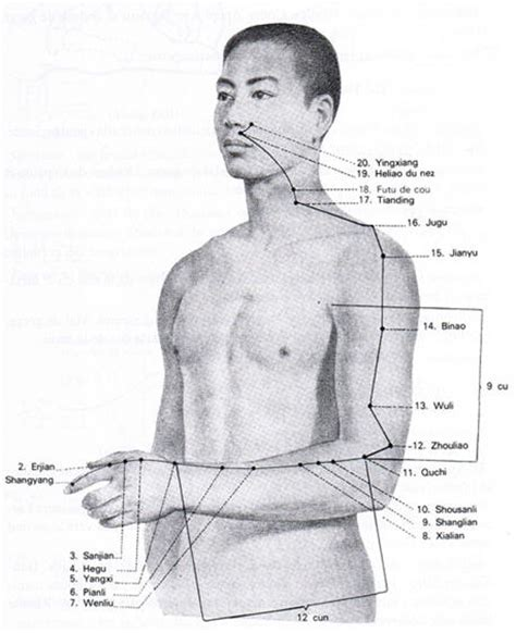 meridien du poumon acupuncture meridien du gros intestin tao et spiritualit 233