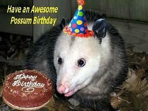 It's roguepossum3 and stephmaree's BIRTHDAY!!!