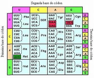Nombre De Fautes Code : anonymous biologist 7 1 el c digo gen tico ~ Medecine-chirurgie-esthetiques.com Avis de Voitures