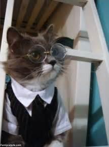 smart cat smart cat is smart