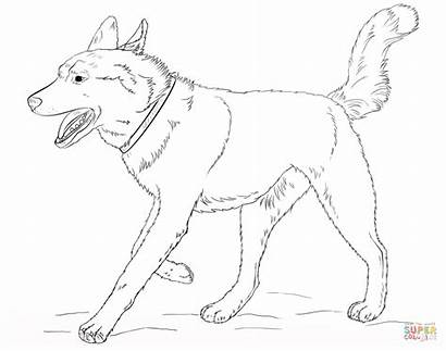 Husky Coloring Dog Siberian Printable Running Ausmalbilder