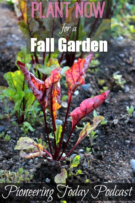 crops to plant in the fall 5 vegetables to plant now for a fall harvest melissa k norris