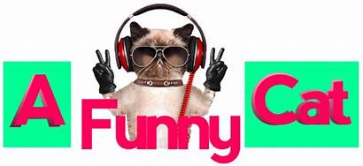 Cat Funny Fail Funnypicture