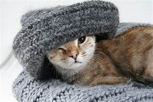 Russians Are The World's Biggest Cat Lovers! - Land of Cats