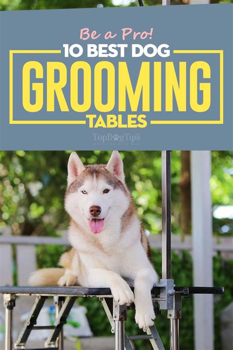 best grooming top 10 best grooming tables for home or salon in 2017