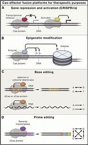 4 Applications Of Catalytically Impaired Crispr