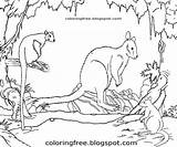 Australian Colouring Printable Marsupial Wildlife Animals Coloring Outback Drawing Tree Rainforest Clipart Creatures Kangaroo Colour Realistic Wallaby Pademelon Complex Discovery sketch template