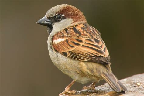 home design for small spaces house sparrow passer domesticus