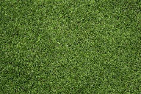 lawn grass know your turfgrass sportsfield management