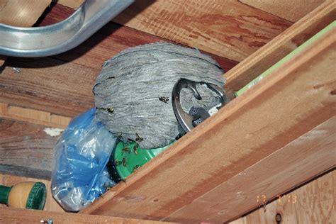 können wespen unterm dach schaden anrichten wespen unterm dach wespen unterm dach bek mpfen so geht s irchenrieht tausende wespen