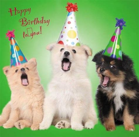 details  happy birthday blank  card dogs