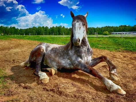 long horses furrytips reader horse supported earn affiliate commission links through site