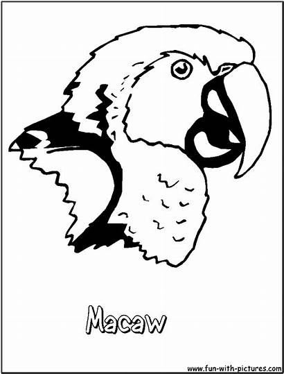 Coloring Macaw Pages Parrot Printable Scarlet Cartoon