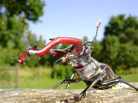creepy bugs   ohio
