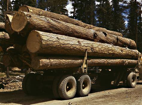filetruck load  ponderosa pine edward hines lumber