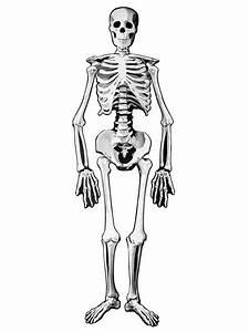 Deko Bilder Schwarz Weiss : skelett pappfigur beweglich halloween deko weiss schwarz 140cm ~ Bigdaddyawards.com Haus und Dekorationen