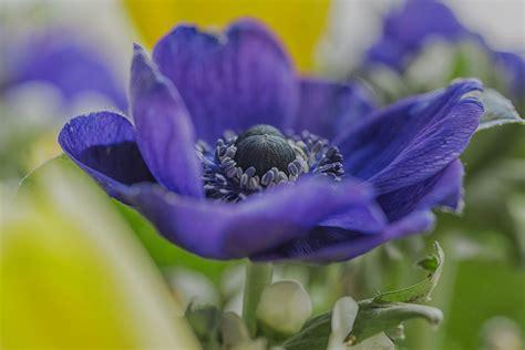 Anemone Foto & Bild | natur-makros, natur-kreativ ...