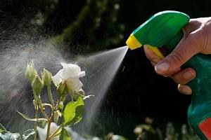 Tips for a bee friendly garden official blog of park seed for Garden pesticides